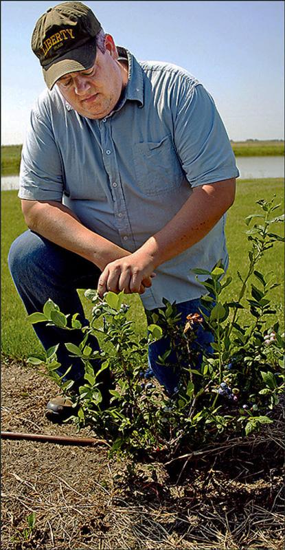 Jason Kerr with blueberry plant.
