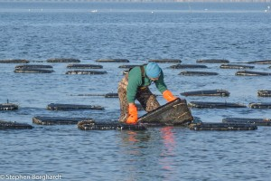Army Vet Dives Into Oyster Farming